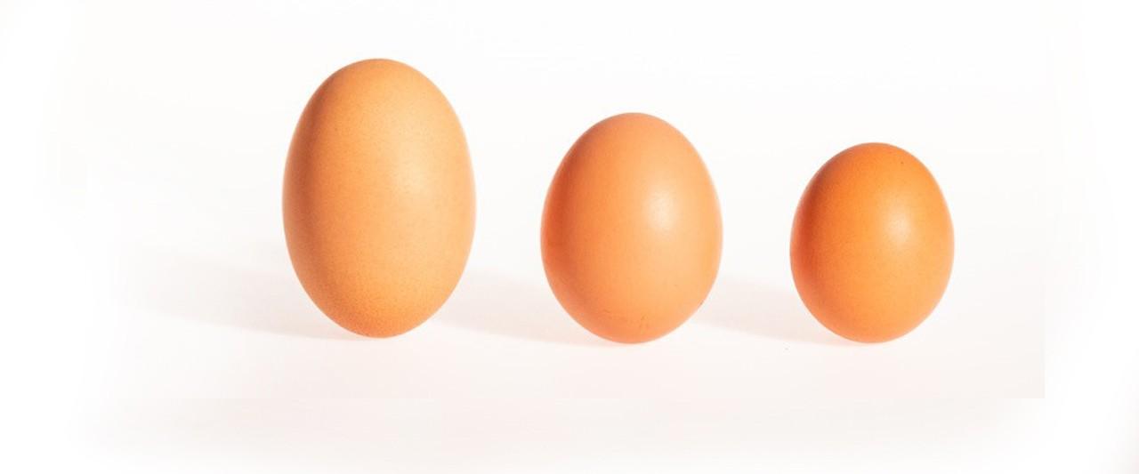 Drei Eiergrößen gibt es - Tipps vom Ringlerhof in Ellbach